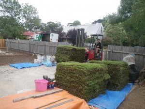 """Feb 14, 2014: taking delivery of 140sm of """"Sir Walter Buffalo"""" turf. This should prove to be a very hardy and low water use lawn."""