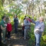 Explaining the benefits of growing food under a canopy of mature trees