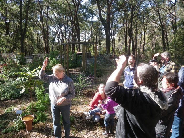 Judith preaches about the benefits of growing food under a canopy of mature trees.