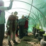 Poly Tunnel greenhouse with concrete filled tyres for thermal mass