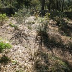 Berms and swales for water retention