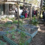 More raised beds