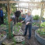 Talking about raising vegetables in raised beds