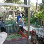 Explaining how an old dog bed can protect sensitive plants from hot sun and frost