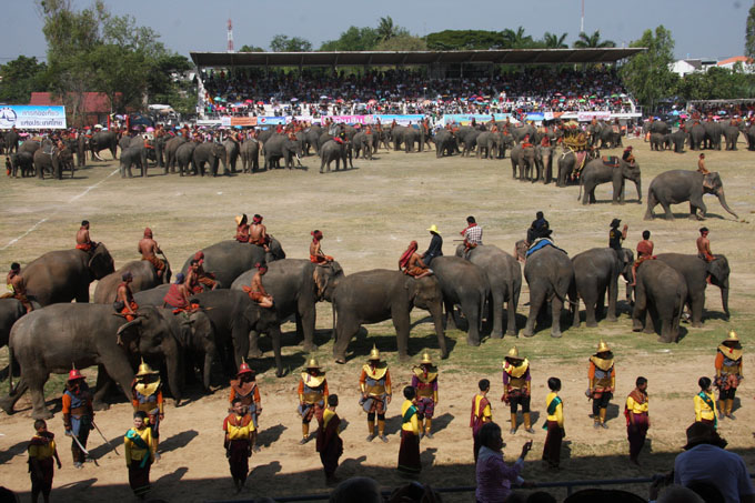 lots-of-elephants