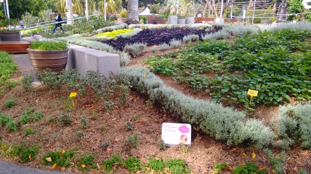 A bit further along the South Bank is an interactive culinary herb garden cared for by a group calling itself 'Epicurious'.