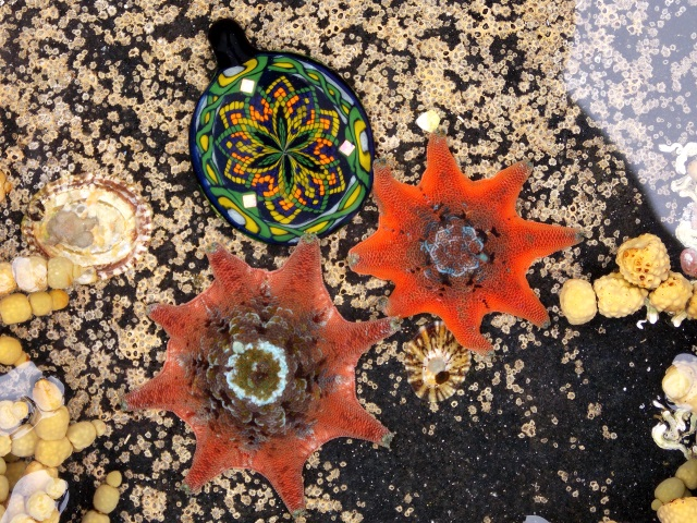 Kindred Spirits - star fish in a rock pool with a glass pendant by Absaroka Glass.