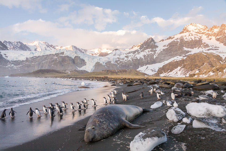 South Georgia Island sits just above the Antarctic Circle in the Southern Atlantic Ocean (Image Source: