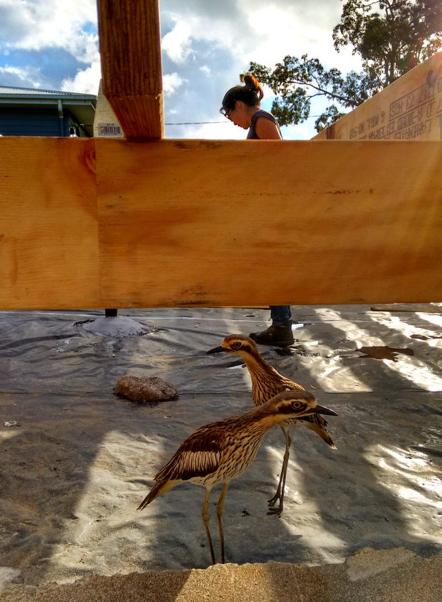 Cintia working on the floor framing with the help of a couple of Curlews.